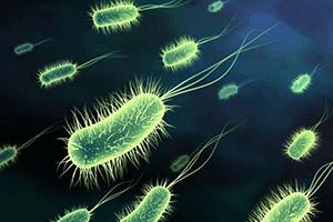 Лечение микоплазмоза антибиотиками